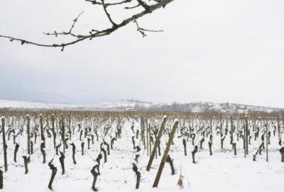 vue-cerisier-hiver-baumann-zirgel